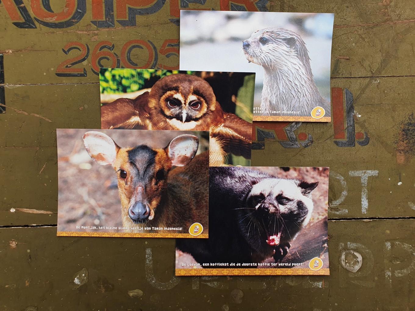 Een set van 4 ansichtkaarten met dieren uit ons park. Leuk om op de post te doen, of in te lijsten in je fotolijst.